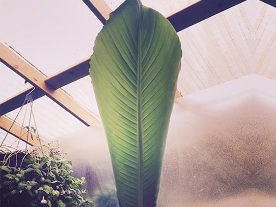 Nectar Lounge - Venue Interior Plants